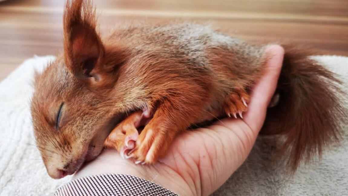 Hörnchen-Zuwachs bei der Grenzenlosen Tierhilfe