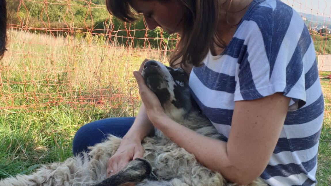 News von der Schafsbande