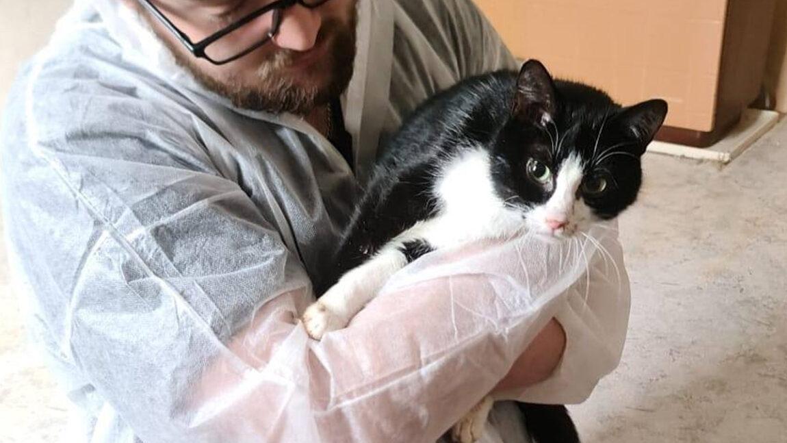 Katzenleid: Mama-Katze verliert ihre Babys