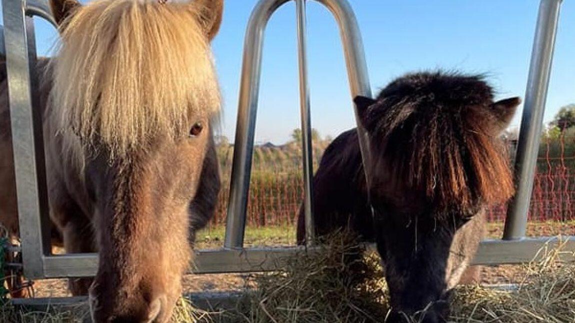 Zubehör für unsere Pferde-Boys
