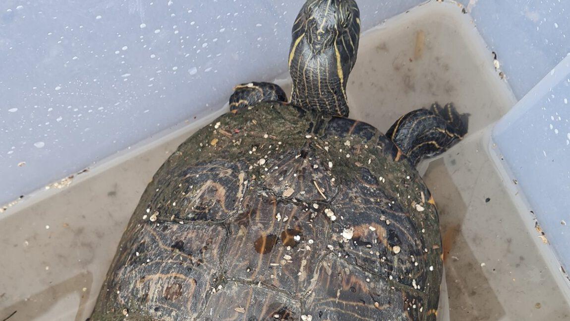 Schildkröte und Kitten aus dem Müll